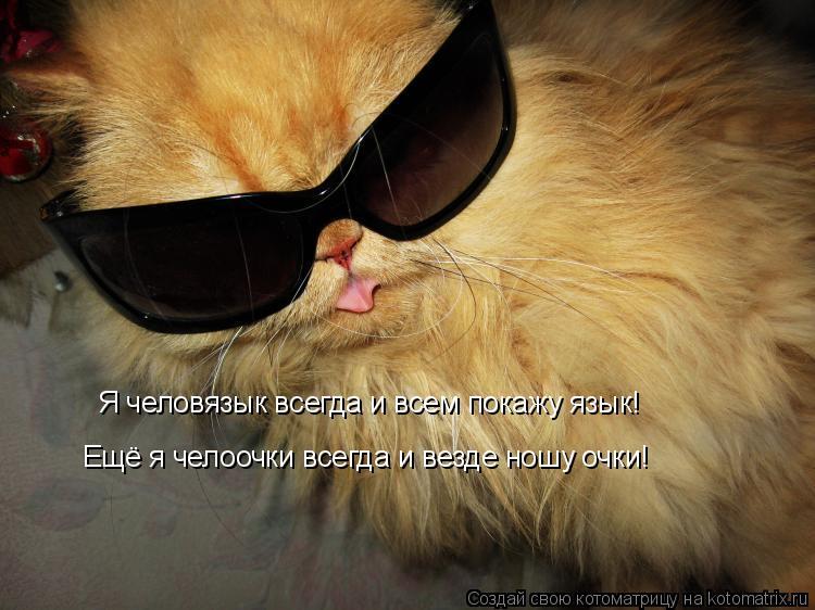 Котоматрица: Я человязык всегда и всем покажу язык! Ещё я челоочки всегда и везде ношу очки!