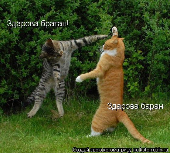 Котоматрица: Здарова братан! Здарова баран
