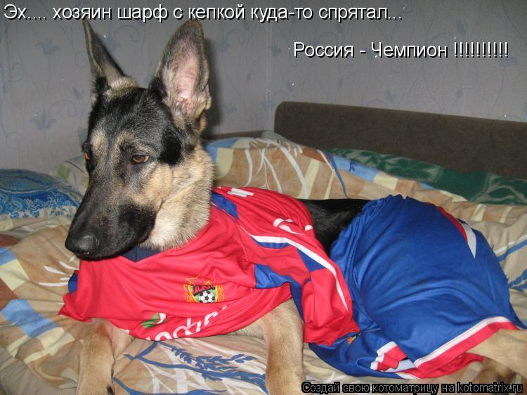 Котоматрица: Эх.... хозяин шарф с кепкой куда-то спрятал... Эх.... хозяин шарф с кепкой куда-то спрятал... Россия - Чемпион !!!!!!!!!!