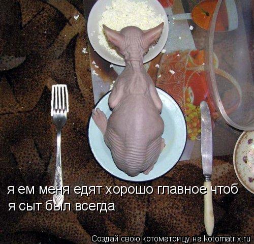 Котоматрица: я ем меня едят хорошо главное чтоб  я сыт был всегда