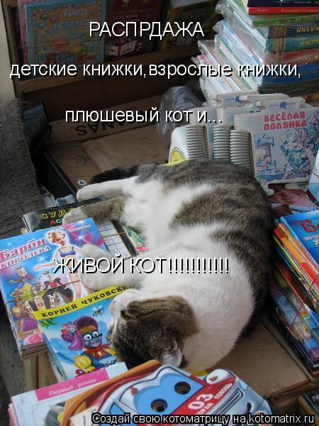 Котоматрица: РАСПРДАЖА детские книжки,зрослые книжкии,плюшевый кот детские книжки,взрослые книжки, плюшевый кот и... ЖИВОЙ КОТ!!!!!!!!!!!
