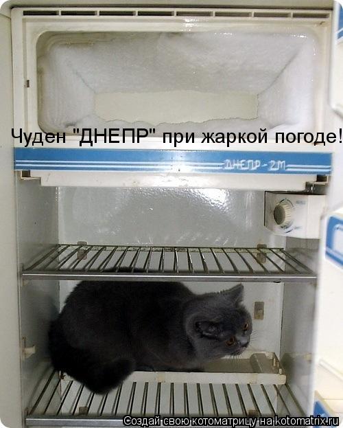 "Котоматрица: Чуден ""ДНЕПР"" при жаркой погоде!"