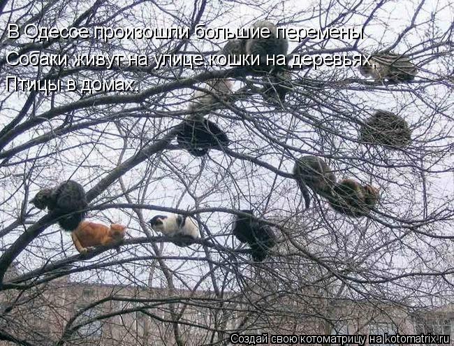 Котоматрица: В Одессе произошли большие перемены Cобаки живут на улице,кошки на деревьях, Птицы в домах.