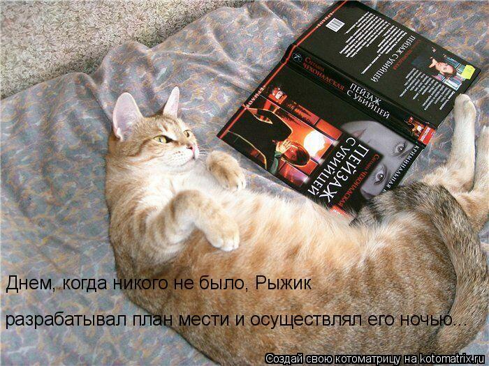 Котоматрица: Днем, когда никого не было, Рыжик  разрабатывал план мести и осуществлял его ночью...