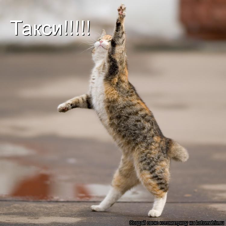 Котоматрица: Такси!!!!!
