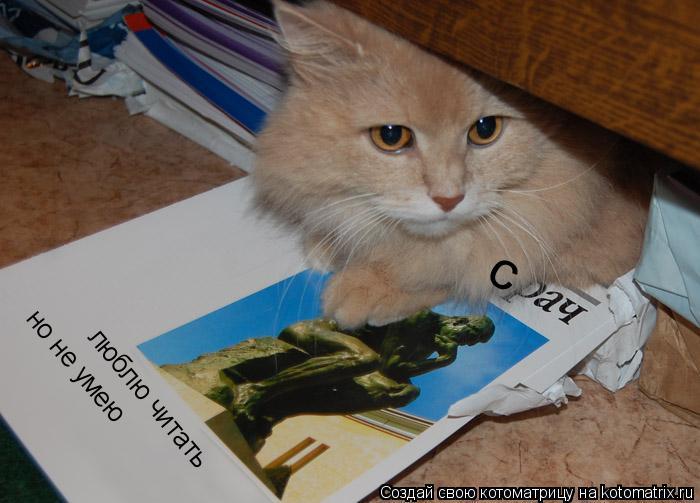 Котоматрица: с люблю читать но не умею