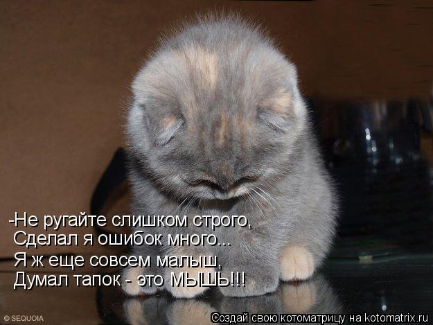 Котоматрица: -Не ругайте слишком строго, Сделал я ошибок много... Я ж еще совсем малыш, Думал тапок - это МЫШЬ!!!