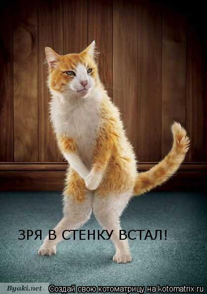 Котоматрица: ЗРЯ В СТЕНКУ ВСТАЛ!