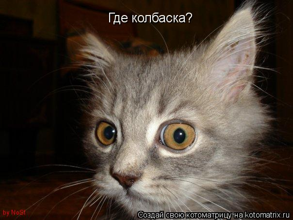 Котоматрица: Где колбаска? by NoSt