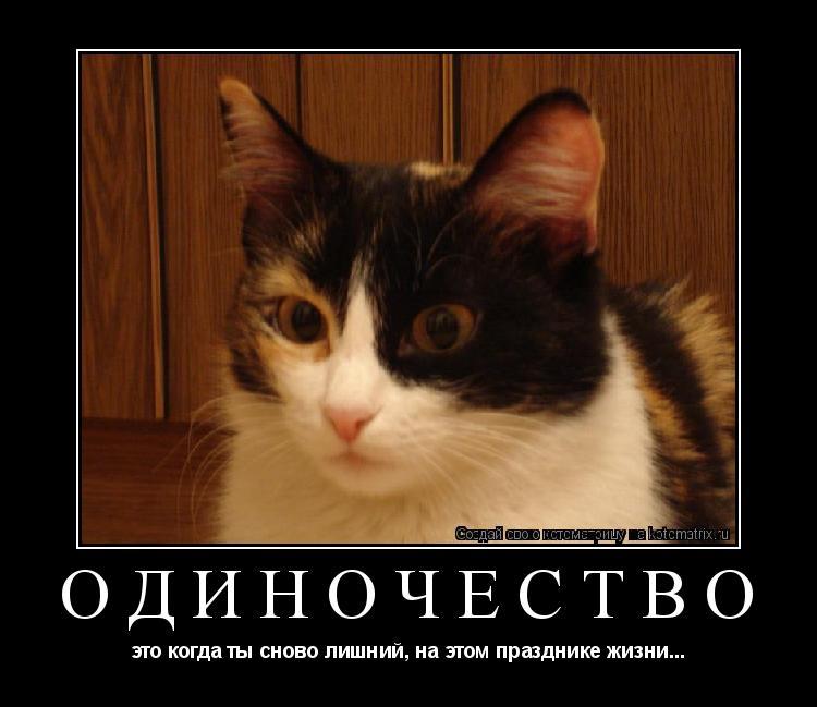 Котоматрица: одиночество это когда ты сново лишний, на этом празднике жизни...