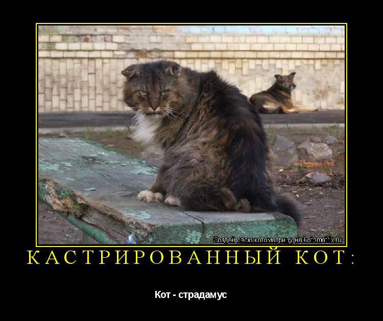Котоматрица: Кастрированный кот: Кот - страдамус