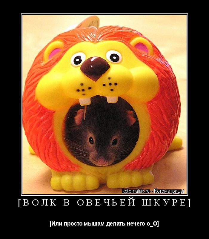 Котоматрица: [Волк в овечьей шкурЕ] [Или просто мышам делать нечего о_О]