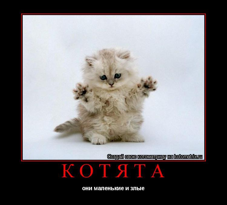 Котоматрица: Котята они маленькие и злые