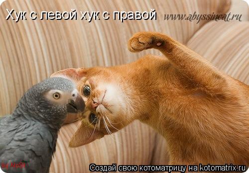Котоматрица: Хук с левой хук с правой by NoSt