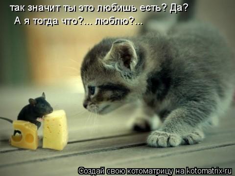 Котоматрица: так значит ты это любишь есть? Да? А я тогда что?... люблю?...