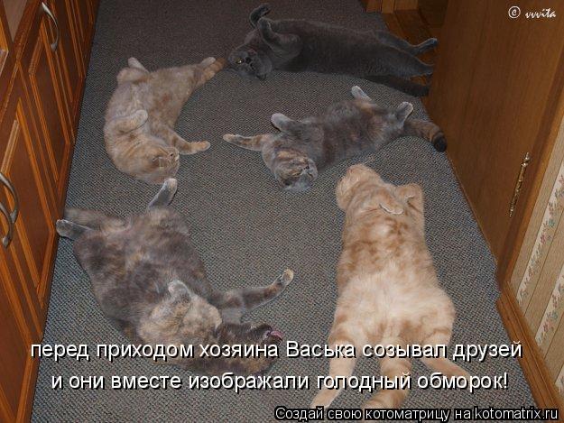 Котоматрица: перед приходом хозяина Васька созывал друзей и они вместе изображали голодный обморок!