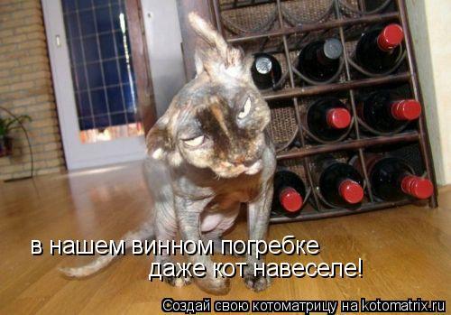 Котоматрица: в нашем винном погребке даже кот навеселе!