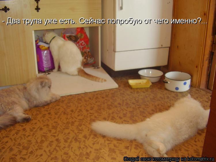 Котоматрица: - Два трупа уже есть. Сейчас попробую от чего именно?...