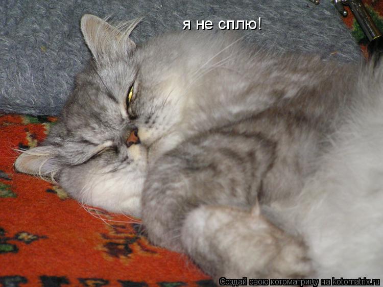 Котоматрица: я не сплю!