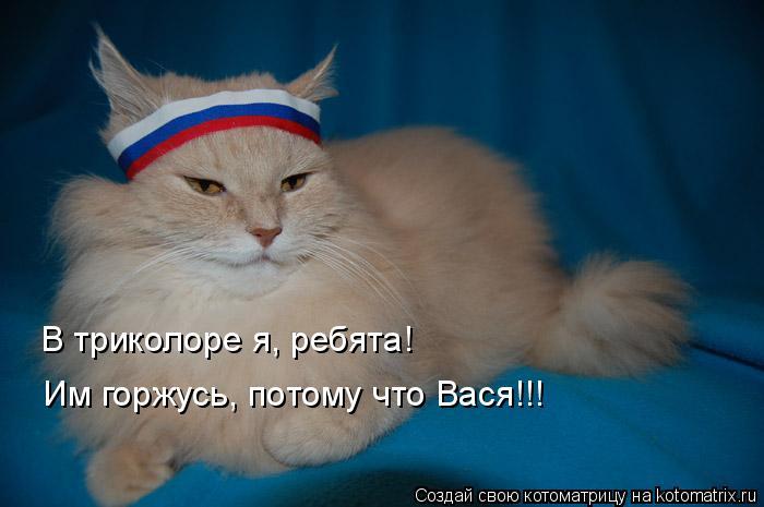 Котоматрица: В триколоре я, ребята! Им горжусь, потому что Вася!!!