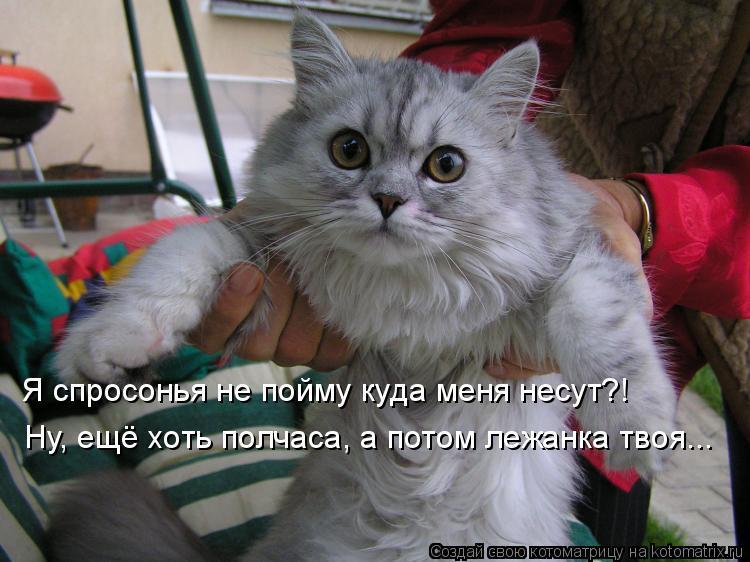 Котоматрица: Я спросонья не пойму куда меня несут?! Ну, ещё хоть полчаса, а потом лежанка твоя...