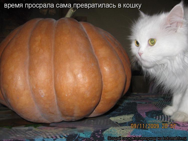 Котоматрица: время просрала сама превратилась в кошку