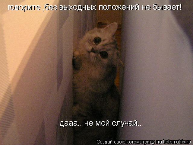 Котоматрица: говорите ,без выходных положений не бывает!  дааа...не мой случай...