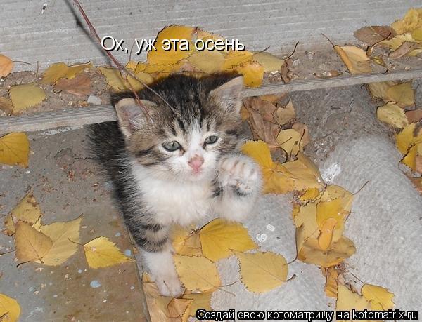 Котоматрица: Ох, уж эта осень