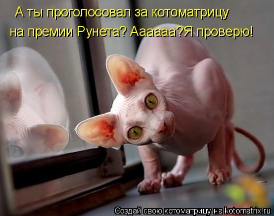 Котоматрица: А ты проголосовал за котоматрицу на премии Рунета? Аааааа?Я проверю!