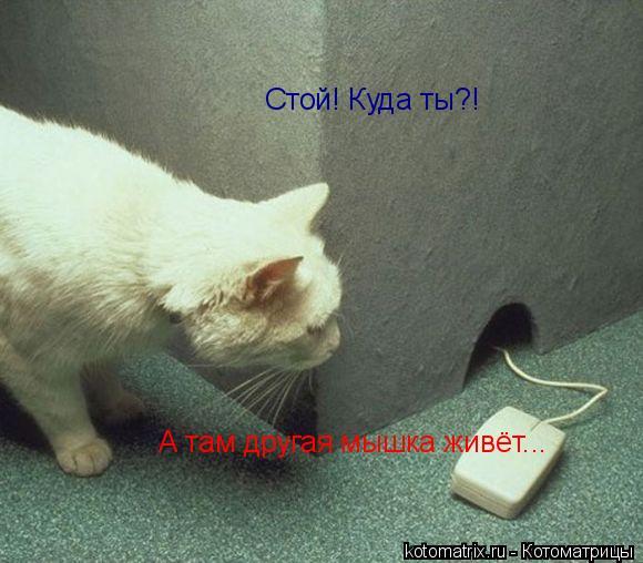 Котоматрица: Стой! Куда ты?!  А там другая мышка живёт...