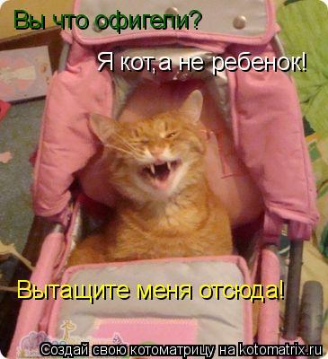 Котоматрица: Вы что офигели? Я кот,а не ребенок! Вытащите меня отсюда!