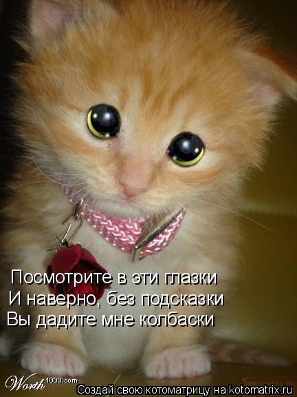 Котоматрица: Посмотрите в эти глазки И наверно, без подсказки Вы дадите мне колбаски