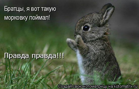 Котоматрица: Братцы, я вот такую  морковку поймал! Правда правда!!!