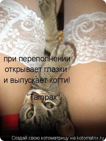 """Котоматрица: """"Tampax""""   и выпускает когти!   открывает глазки при переполнении"""