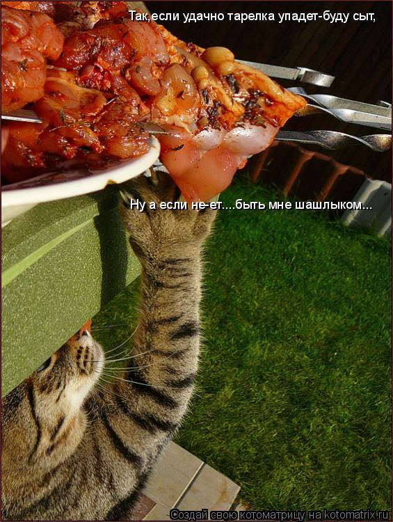 Котоматрица: Так,если удачно тарелка упадет-буду сыт, Ну а если не-ет....быть мне шашлыком...
