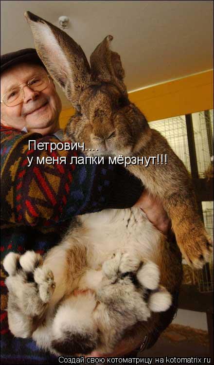 Котоматрица: Петрович.... у меня лапки мёрзнут!!!