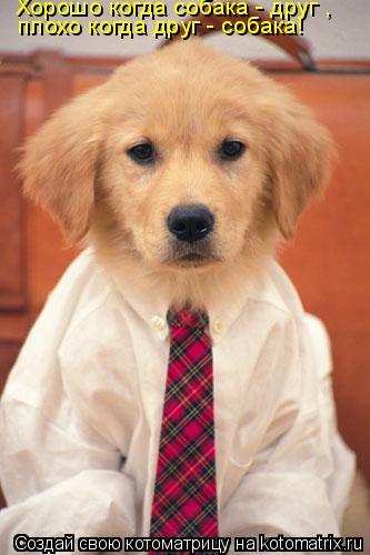 Котоматрица: Хорошо когда собака - друг , плохо когда друг - собака!