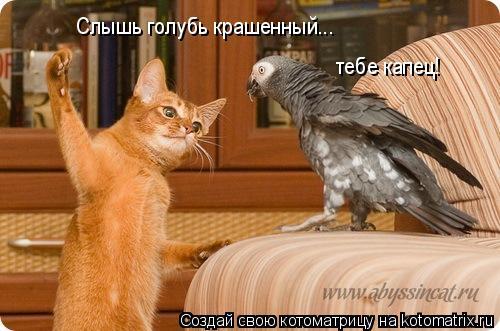 Котоматрица: Слышь голубь крашенный... тебе капец!