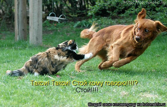 Котоматрица: Такси! Такси! Стой кому говорю!!!!?  Стой!!!!