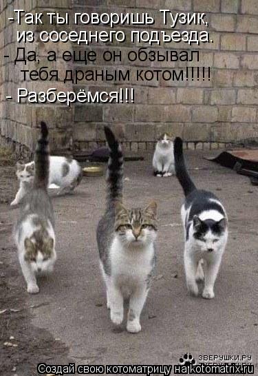 Котоматрица: -Так ты говоришь Тузик, из соседнего подъезда. - Да, а еще он обзывал   тебя драным котом!!!!! - Разберёмся!!!