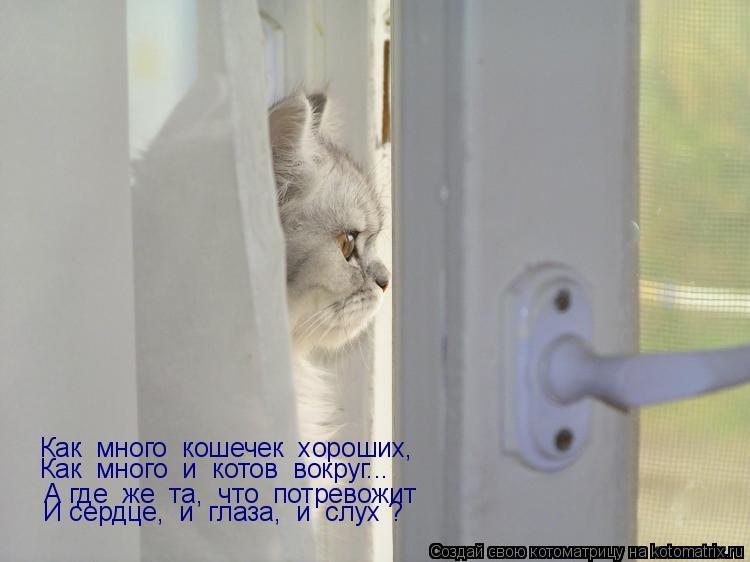 Котоматрица: Как  много  кошечек  хороших,  Как  много  и  котов  вокруг...  А где  же  та,  что  потревожит  И сердце,  и  глаза,  и  слух ?