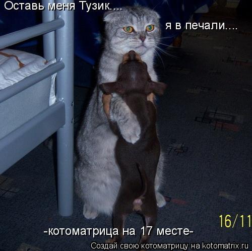 Котоматрица: Оставь меня Тузик.... я в печали.... -котоматрица на 17 месте-
