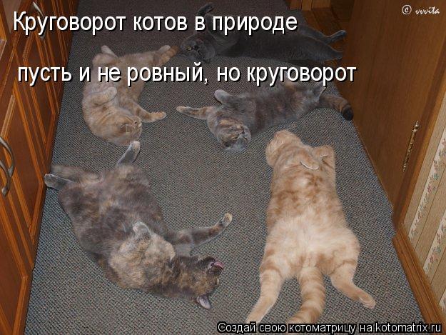 Котоматрица: Круговорот котов в природе пусть и не ровный, но круговорот
