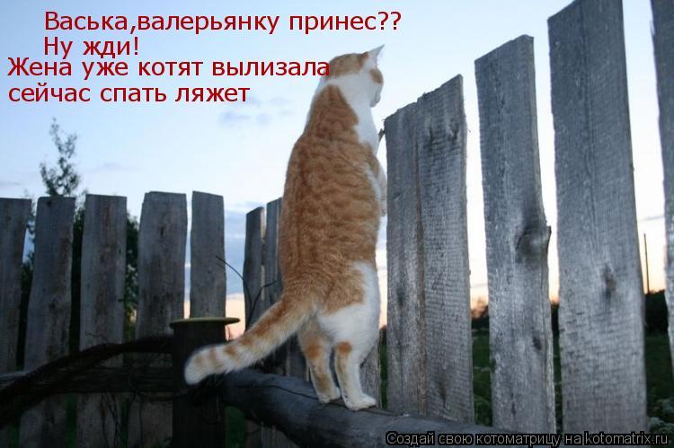 Котоматрица: Васька,валерьянку принес?? Ну жди! Жена уже котят вылизала сейчас спать ляжет