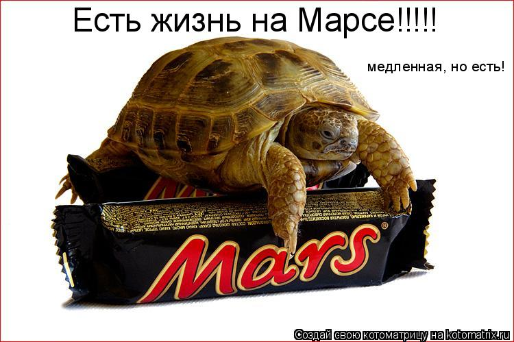 Котоматрица: Есть жизнь на Марсе!!!!! медленная, но есть!