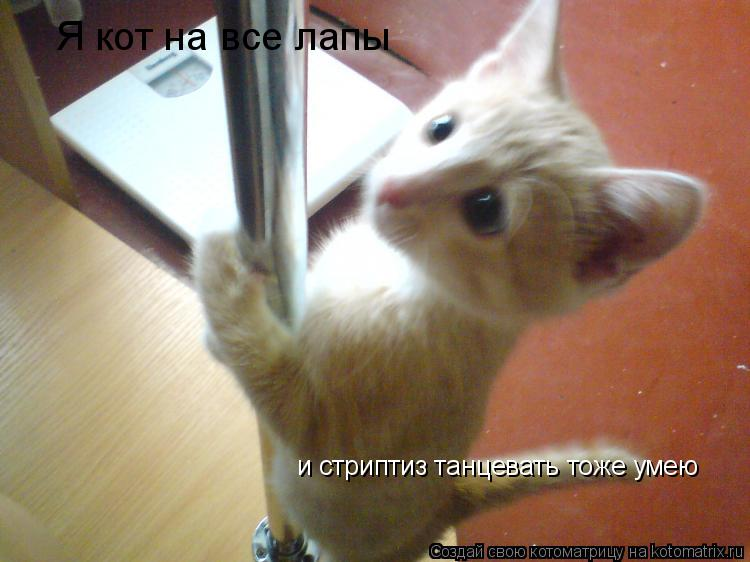 Котоматрица: Я кот на все лапы и стриптиз танцевать тоже умею