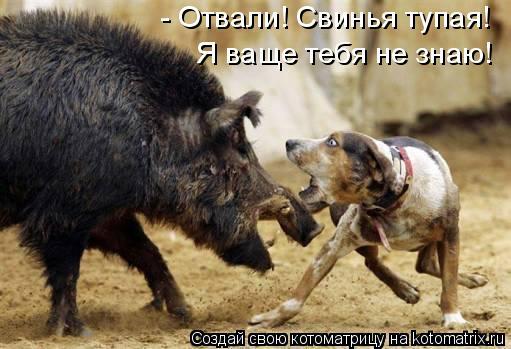 Котоматрица: - Отвали! Свинья тупая! Я ваще тебя не знаю!