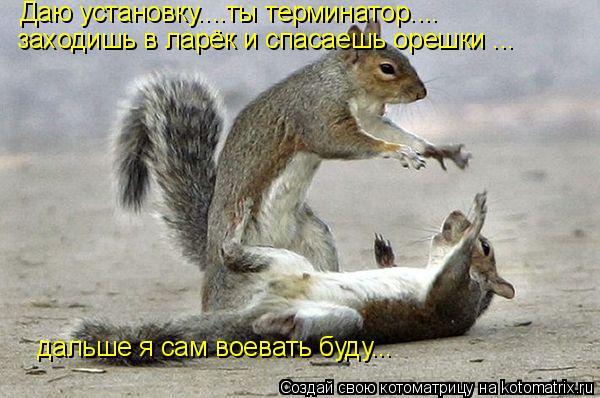 Котоматрица: Даю установку....ты терминатор.... заходишь в ларёк и спасаешь орешки ... дальше я сам воевать буду...