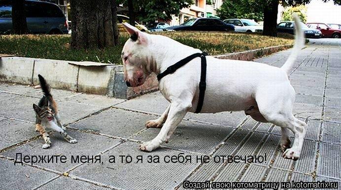 Котоматрица: -Держите меня, а то я за себя не отвечаю!