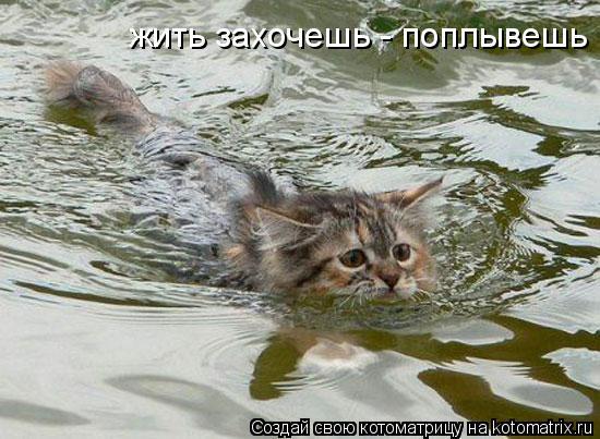 Котоматрица: жить захочешь - поплывешь